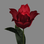 sp-rose-02