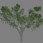 ja_magnolia_scr1