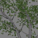 ja_magnolia_scr2