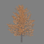 ja_quercus_rubra_red_oak_scr1