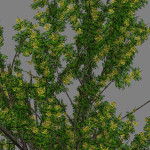yvh-acacia-scr1