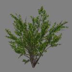 yvh-acacia-scr2