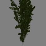 yvh-aspen-scr1