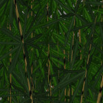 yvh-bamboo-scr2