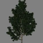 yvh-eucalyptus-scr1
