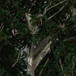 yvh-eucalyptus-scr2
