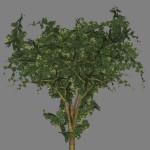 yvh-farinha-seca-scr1