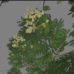 yvh-farinha-seca-scr2