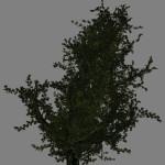 yvh-oak-scr1