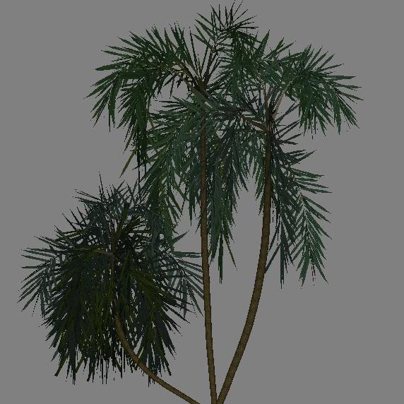 yvh-palm-acai-scr1