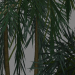 yvh-palm-acai-scr2
