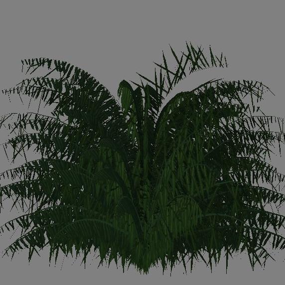 yvh-palm-cycas-scr1