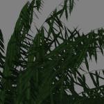 yvh-palm-cycas-scr2
