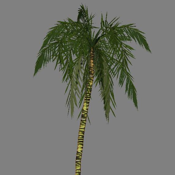 yvh-palm-generic-scr1