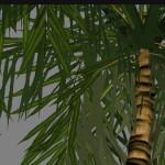 yvh-palm-generic-scr2
