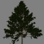yvh-pine-scr1