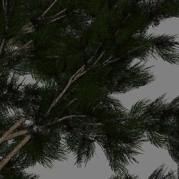 yvh-pine-scr2
