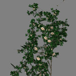 yvh-rose-scr1