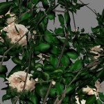 yvh-rose-scr2