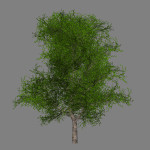 mr_maple_tree_scr1