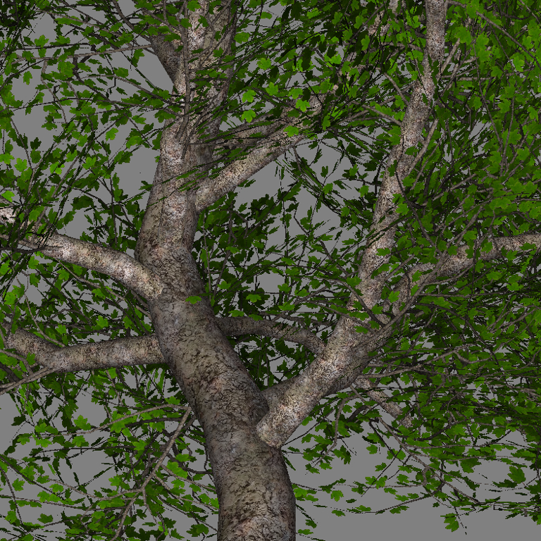 mr_maple_tree_scr2