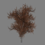 mr_red_oak_tree_scr1