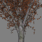 mr_red_oak_tree_scr2