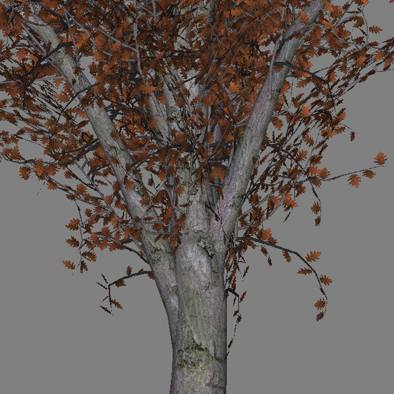 mr_red_oak_tree_scr2