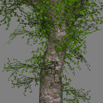 mr_wild_maple_tree_scr2